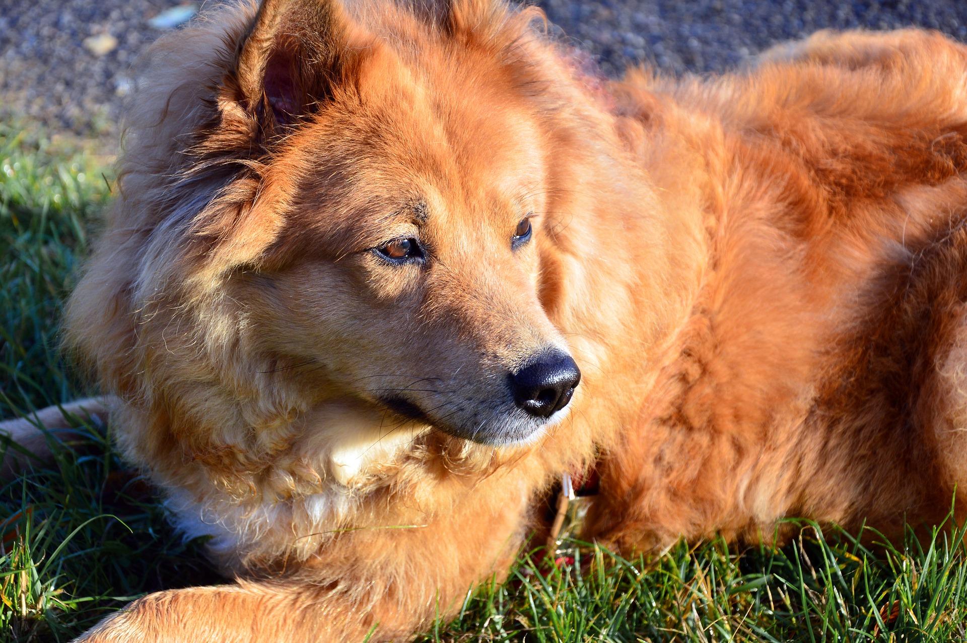 Grüne Gellersen für eine fairere Hundesteuer